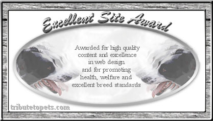 Tribute To Pets Award