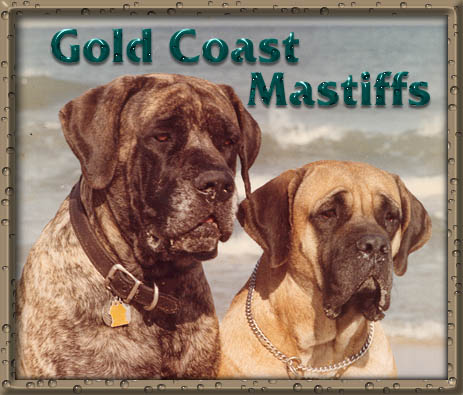 Gold Coast Mastiffs