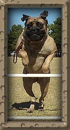 Tara Jumping Front