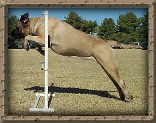 Tara Jumping Side